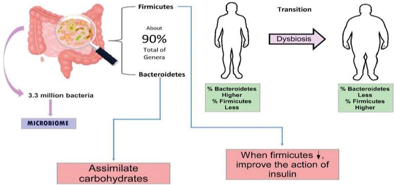The Microbiome and the Epigenetics of Diabetes Mellitus ...