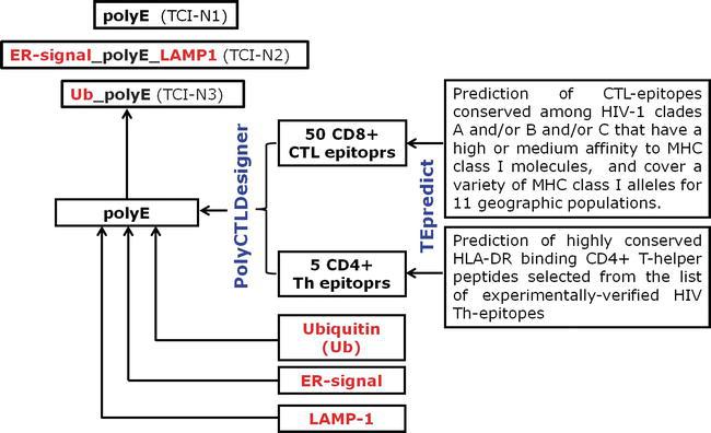 Artificial Epitope-Based Immunogens in HIV-Vaccine Design | IntechOpen
