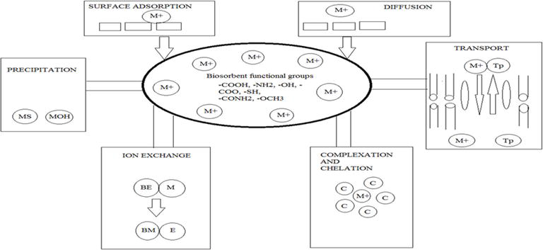 Application of Biosorption for Removal of Heavy Metals from