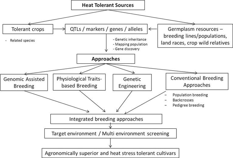 Breeding Cultivars for Heat Stress Tolerance in Staple Food Crops