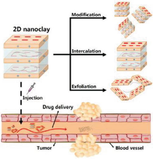 Development of Clay Nanoparticles Toward Bio and Medical