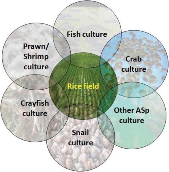 Integrated Rice and Aquaculture Farming | IntechOpen