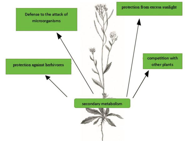 Introduction To Phytochemicals Secondary Metabolites From Plants With Active Principles For Pharmacological Importance Intechopen