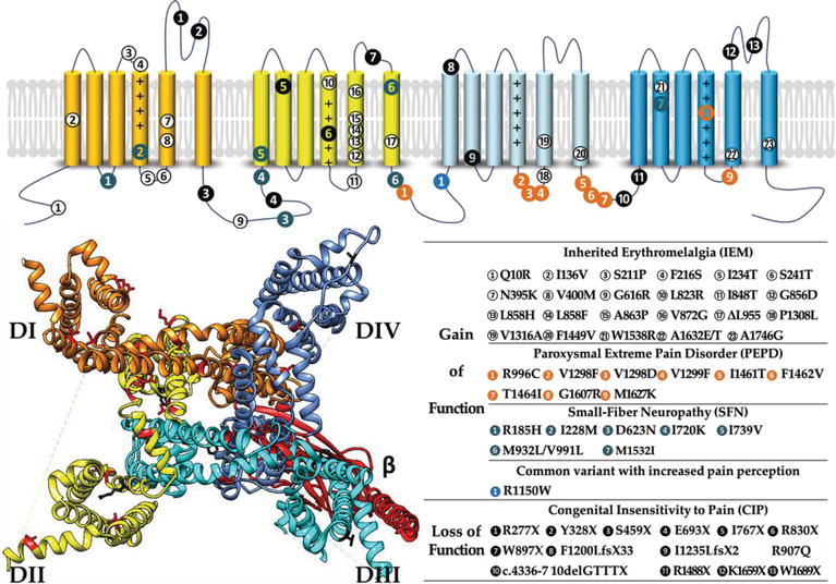 Voltage-Gated Sodium Channels in Drug Discovery | IntechOpen