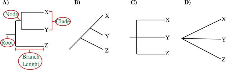 Phylogenetics | IntechOpen