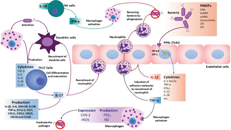 Immune System May Play Crucial Role In >> Cytokine Profiling Plays A Crucial Role In Activating Immune