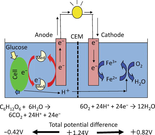 Catalyst Development of Microbial Fuel Cells for Renewable