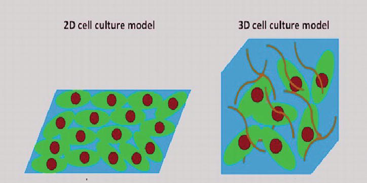 Two-Dimensional (2D) and Three-Dimensional (3D) Cell Culturing in ...