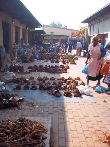 Herbal Medicines in African Traditional Medicine   IntechOpen