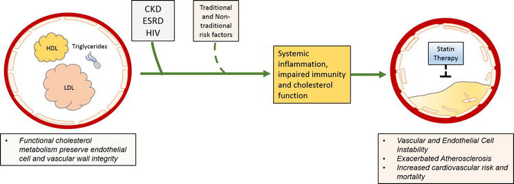 Dyslipidemia in Special Populations, the Elderly, Women, HIV