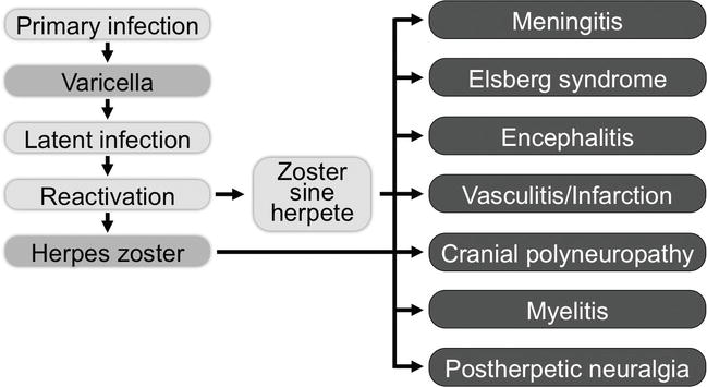 Neurologic Complications of Varicella-Zoster Virus Infection