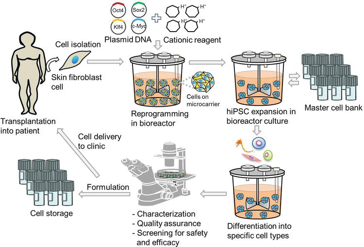 Integrated Biologics Manufacturing in StirredSuspension Bioreactor  A Stem Cell Perspective