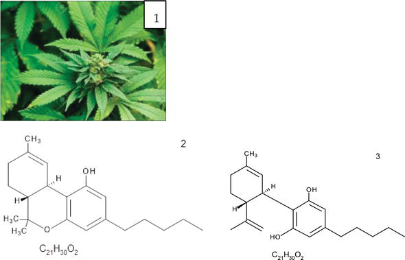 Role of Medicinal and Aromatic Plants: Past, Present, and
