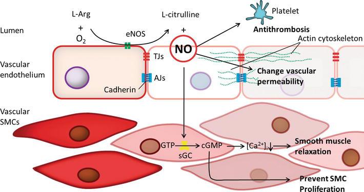 818f3cebebe7 Nitric Oxide and Oxidative Stress-Mediated Cardiovascular ...