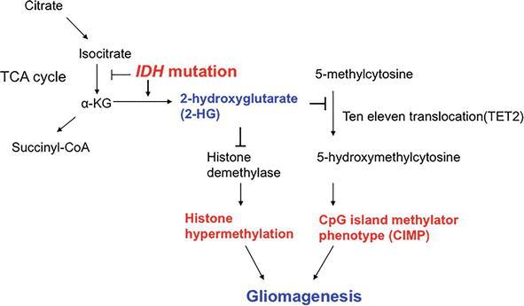 IDH-Mutant Gliomas | IntechOpen