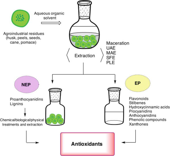 Antioxidant Compounds From Agro Industrial Residue Intechopen