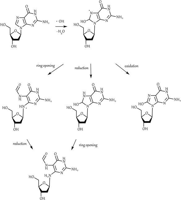 Antioxidant Compounds and Their Antioxidant Mechanism | IntechOpen