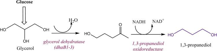 Glycerol Transformation to Value-Added 1,3-Propanediol