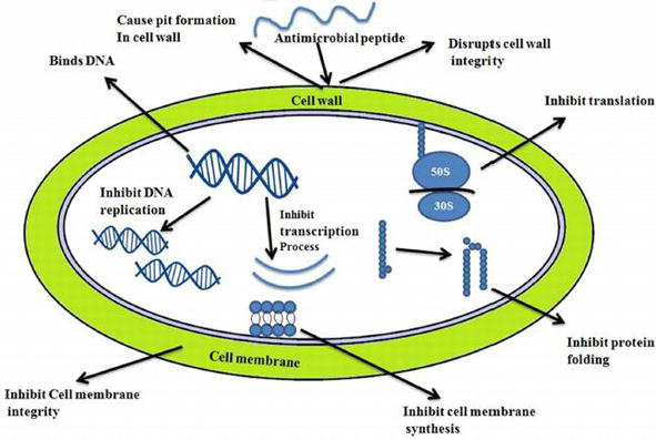 Efficacy of Plant Antimicrobials as Preservative in Food