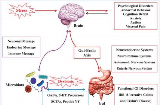 Influence of Gut Microbiota on Behavior and Its Disturbances