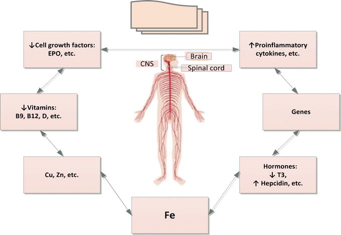 Neurocognitive Dysfunctions in Iron Deficiency Patients