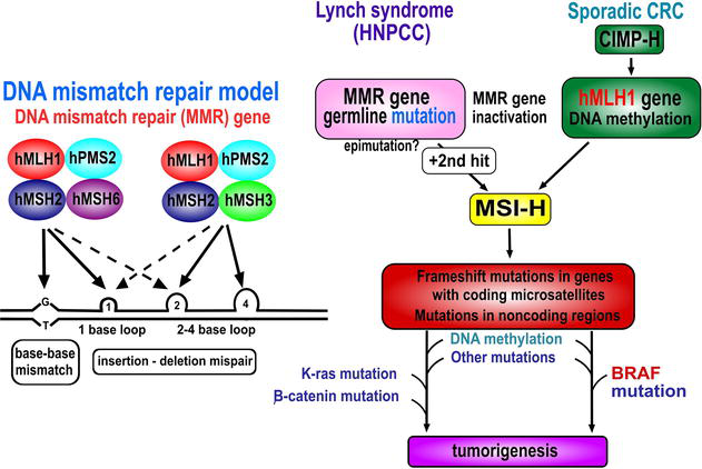 A Genetic Perspective On Colorectal Cancer Progression Intechopen