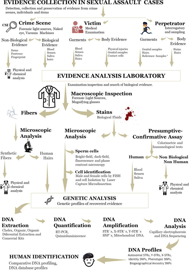 Biological Evidence Analysis In Cases Of Sexual Assault Intechopen