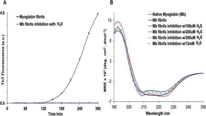 Inhibition Of Protein Fibrillation By Hydrogen Sulfide Intechopen