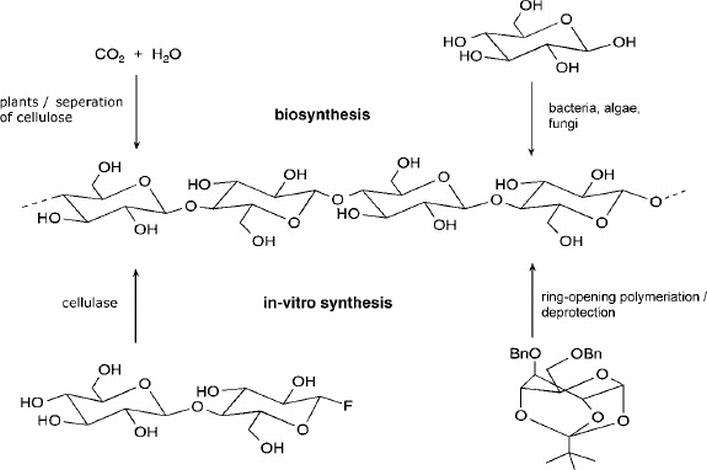 An Update On Overview Of Cellulose  Its Structure And