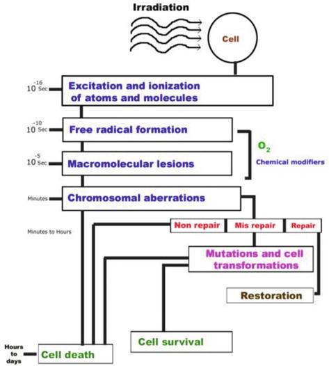 Natural Drugs in DNA Repair | IntechOpen