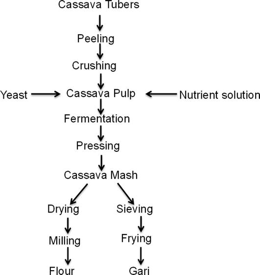 Solid-State Fermentation of Cassava Products for Degradation
