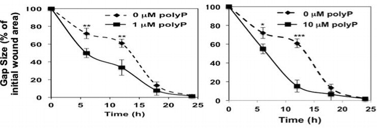 Inorganic Polyphosphates Are Important for Cell Survival and