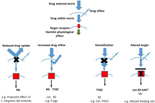 anthelmintic mode of action modalități de a trata viermii la adulți