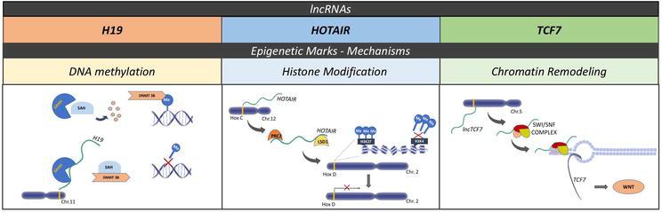 The Function of lncRNAs as Epigenetic Regulators | IntechOpen
