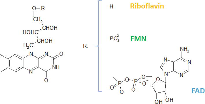Application of Riboflavin Photochemical Properties in