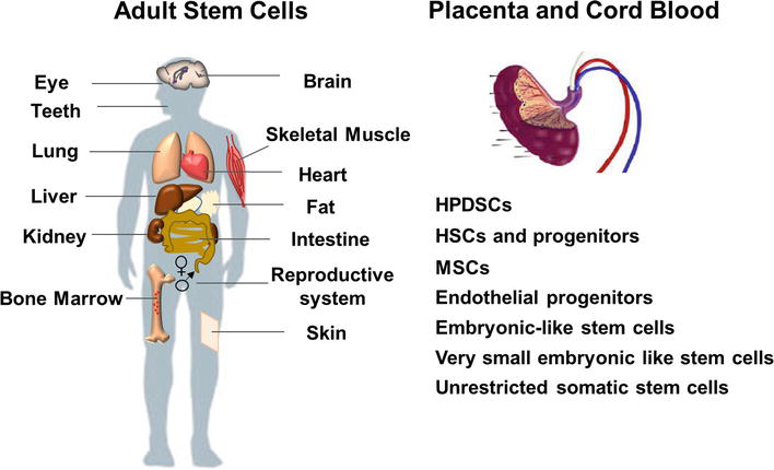 Innovations in Human Stem Cell Research: A Holy Grail for