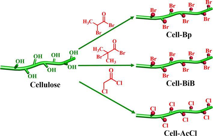 Cellulose Based Thermoplastics And Elastomers Via