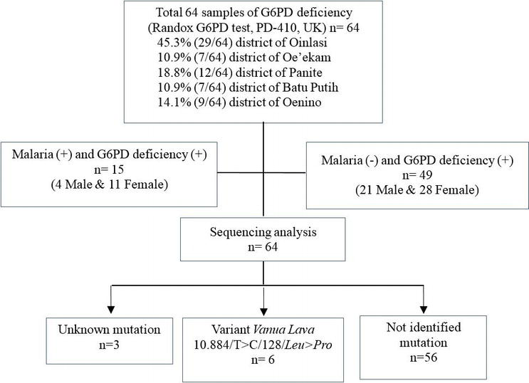 The Genotyping of Glucose 6 Phosphate Dehydrogenase